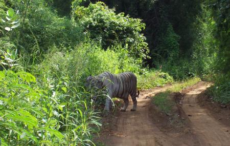 Sanjay Gandhi National Park Image