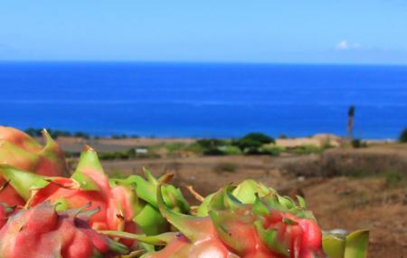 Maui Dragon Fruit Farm Image