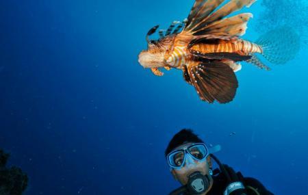 Nemo Diving Center Image