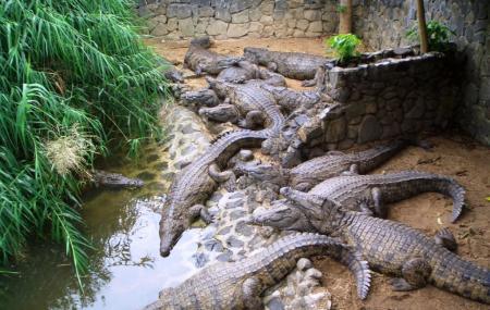 La Vanille Crocodile Park Image