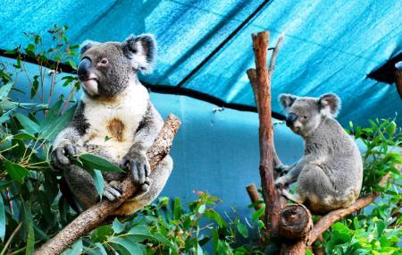Wildlife Sydney Zoo Image