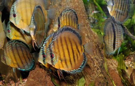New York Aquarium Image