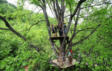 Asheville Zip-line Canopy Adventures Image