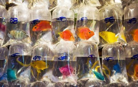 Goldfish Market Image