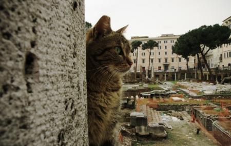 Roman Cat Sanctuary Image