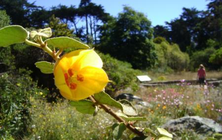 San Francisco Botanical Garden Image