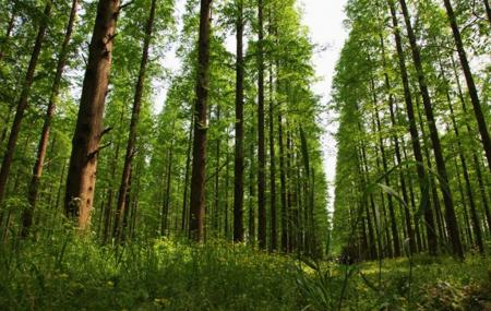 Dongping National Forest Park Image