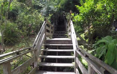 Filbert Steps And Grace Marchant Gardens Image