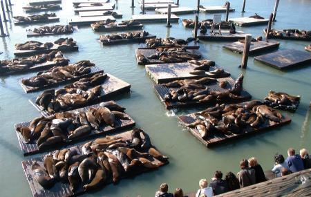 Sea Lion Center Image