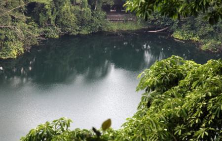 Bukit Timah Nature Reserve Image