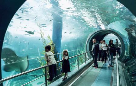 Sea Life Melbourne Aquarium Image