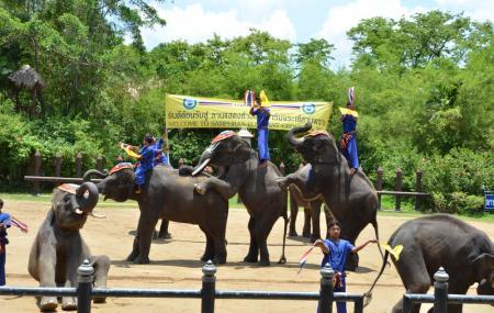 Samphran Elephant Park Image