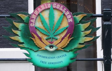 Cannabis College Image