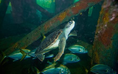 Aracaju Aquarium Image