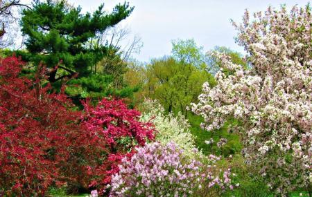 Arnold Arboretum Image