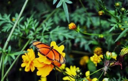 Borboletario Flores Que Voam Image
