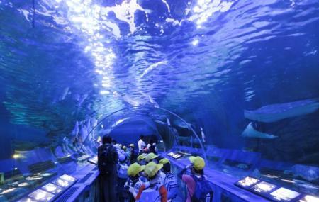 Shinagawa Aquarium Image