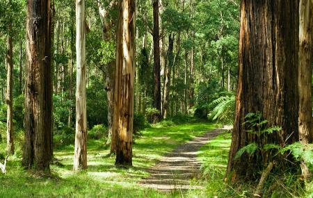 Sheerbrooke Forest Image