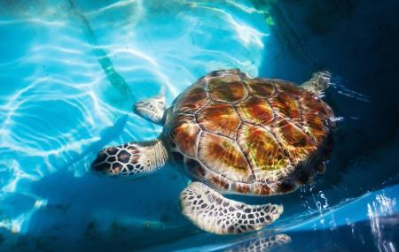 Kosgoda Sea Turtle Conservation Project Image