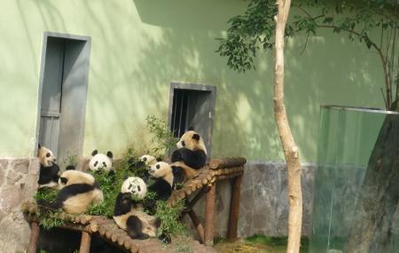 Shanghai Zoo Image