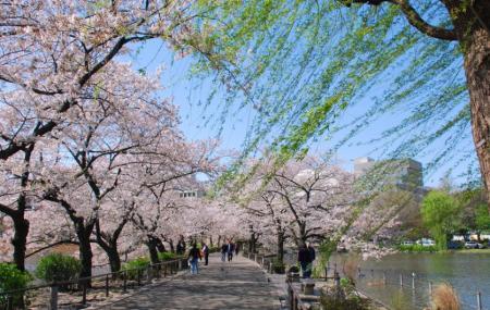 Maruyama Park Image