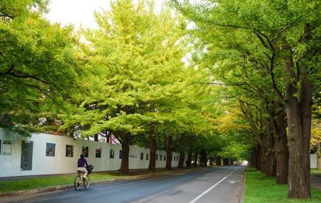 Hokkaido University Sapporo Campus Image