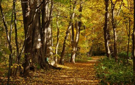 Hokkaido University Botanical Gardens Image