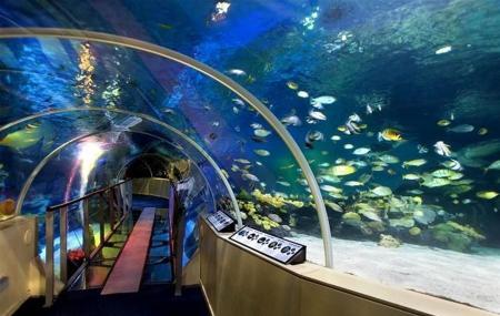 Sea Life London Aquarium London Ticket Price Timings Address
