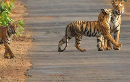 Satkosia Tiger Reserve Image