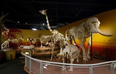 Skeletons- Animals Unveiled Image