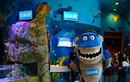 Sea Life Orlando Aquarium Image