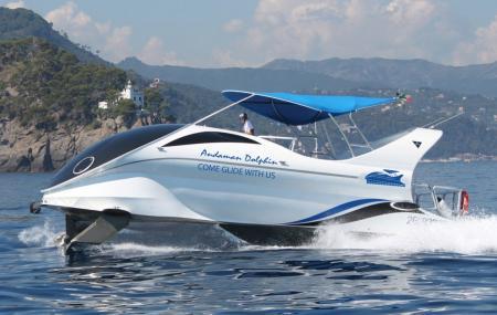Andaman Dolphin Image