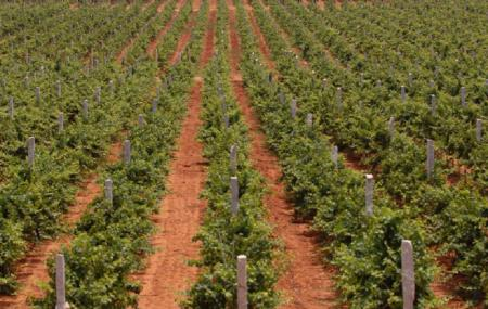 Grover Vineyards Ltd Image