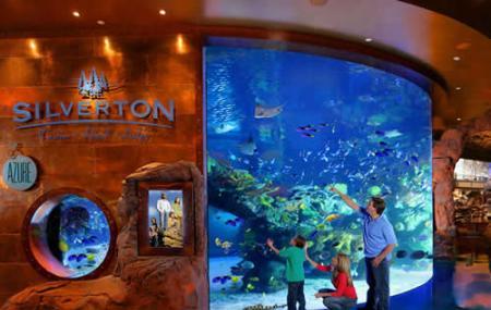 The Aquarium At Silverton Image