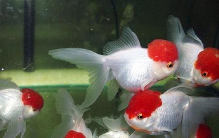 Cifa Aquarium Image