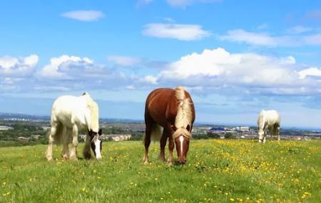 Coolmine Equestrian Centre Image