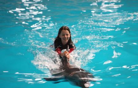 Istanbul Dolphinarium Image