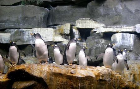 Shedd Aquarium Image