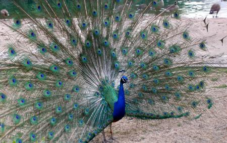 Brookfield Zoo Image