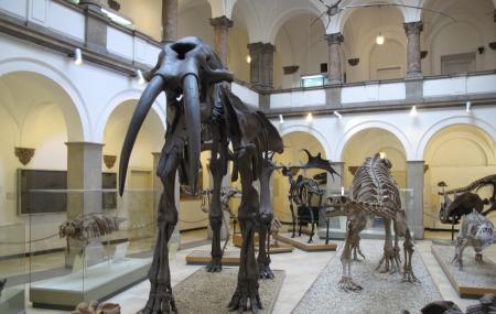 Palaontologisches Museum Munchen Image