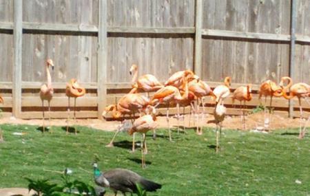 Oklahoma City Zoo And Botanical Garden Image