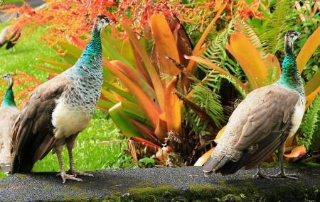 Pana'ewa Rainforest Zoo Image