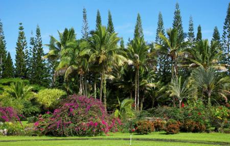 Nani Mau Image