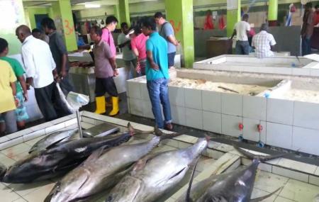 Fish Market Image