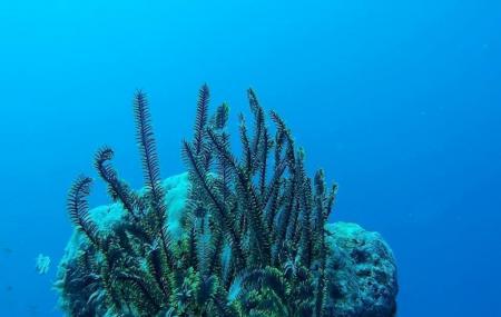 Divers Lodge Maldives Image