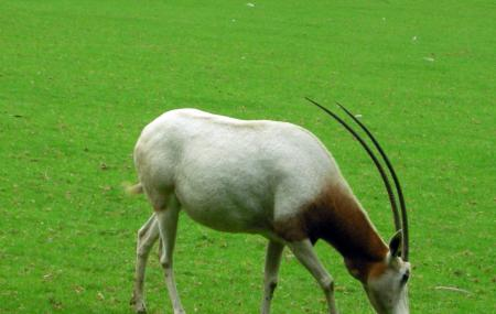 Marwell Wildlife Image