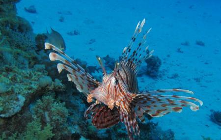Sataya Reef Image
