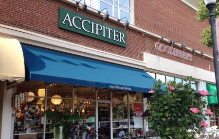 Accipiter Image