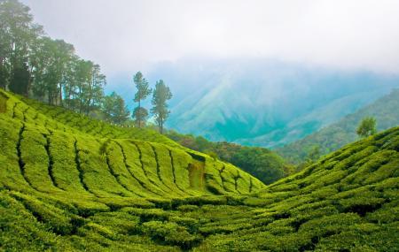 Kolukkumalai Tea Estate Image
