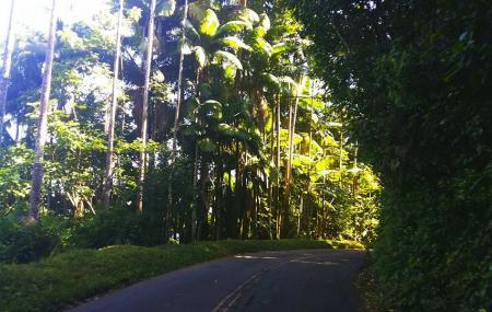Pepeekeo Scenic Drive Image